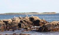 Ambient shoreline
