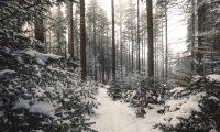 Lost in the Winter Forest
