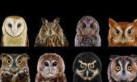 Unreal Owl Campout
