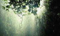 Spring Rain on the Marsh