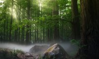Elowen's Forest