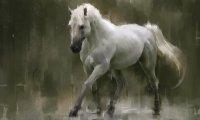 Horses during rain