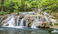 Summer Waterfall + Birds
