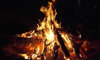 Campfire with wildlife