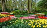 Marluxia's Garden