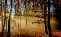 The sounds of sunrise in an autumn forest