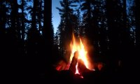 Forest Campfire at Night