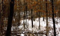 a walk in the winter