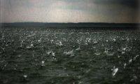 Calming Ocean Rain