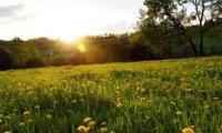 Relaxing meadow in Spring