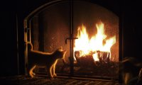 Reading with a cat by a fireplace