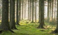 Elven Forest Village