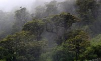 Rainy forest storm