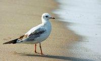Seagulls at the seashore
