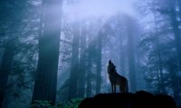 A peaceful forest protected by a wolf pack