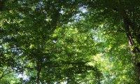 Sunny Treehouse