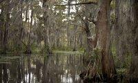 Tadpole Swamp