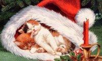 A Cozy Christmas Eve