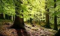 Narnian Woods