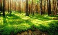 Forest Sunbathing