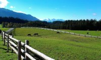 Slow Trip by Oxcart through an Alpine Meadow