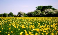 Sunshine, Daisies, and Daffodils