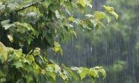 Rainy Forest Magic