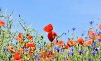 Peaceful summer meadow