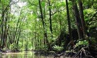 Hoodoo Rootworker's Shack in the Bayou