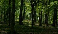 Bosque de Día / Noche