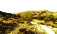 Post Apocalyptic Desert