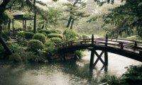 Japanese Rain Garden