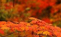 Relaxation in autumn gardens