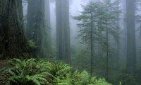 Dathomir Forest