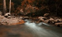 Autumn Evening Stream