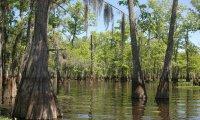 Louisiana Bayou Atmosphere