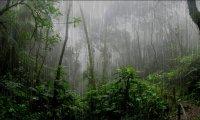 Rainforest and thunder