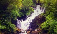 Blissful birdsong from a tranquil waterfall on a sunny spring morning.