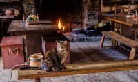 Read by the fire with your kitten on your lap