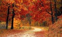 Autumnal Streamside Walk