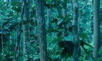 calming rainforrest