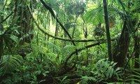 Rainy Jungle
