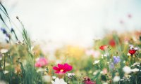 Relaxing grassland in spring