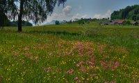 Esheen - Village Sat in a Meadow