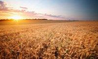 The Silent Plains