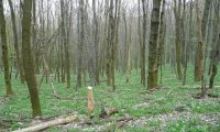 Sping in a forest