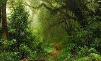 European Forest, spring