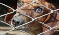 Dog Shelter Scene