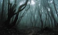 Relaxing 'haunted' rainy forest.