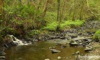 Forest stream, slightly off